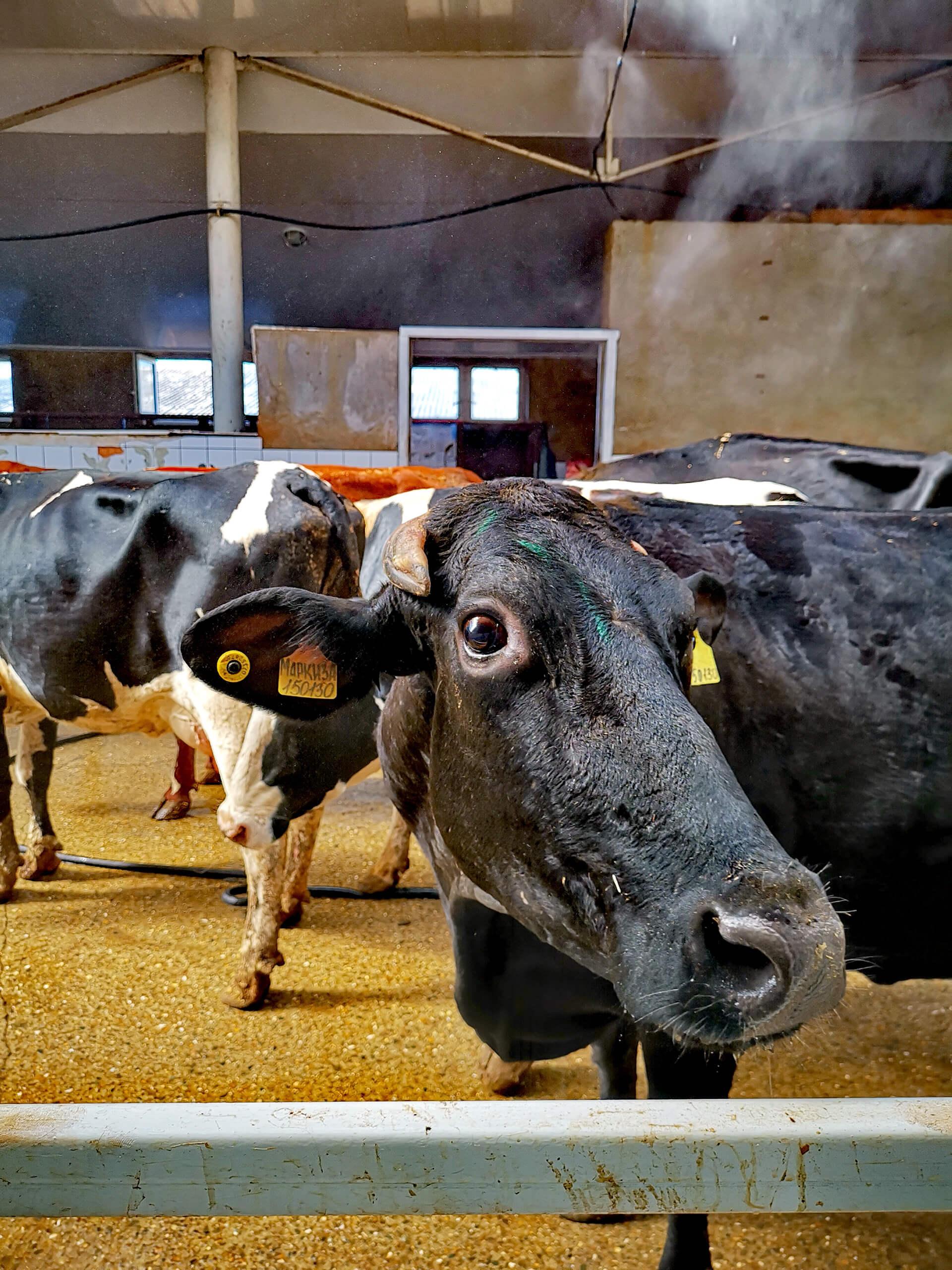 Фото с фермы Молочный двор